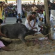 animal sacrifice n