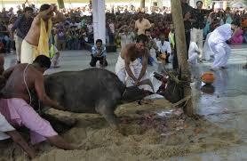 animal sacrifice n